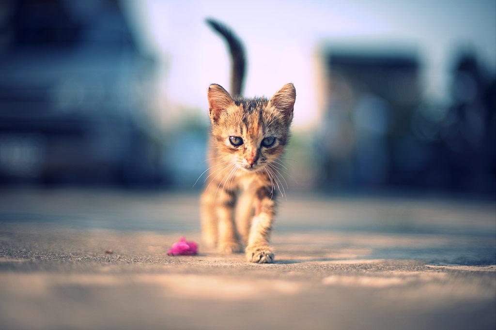 野良犬・野良猫の赤ちゃんを保護するのは正しい行動なのか?その後は?