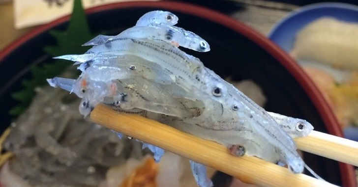 淡路島の生しらす丼/春の訪れを告げる絶品海鮮丼!