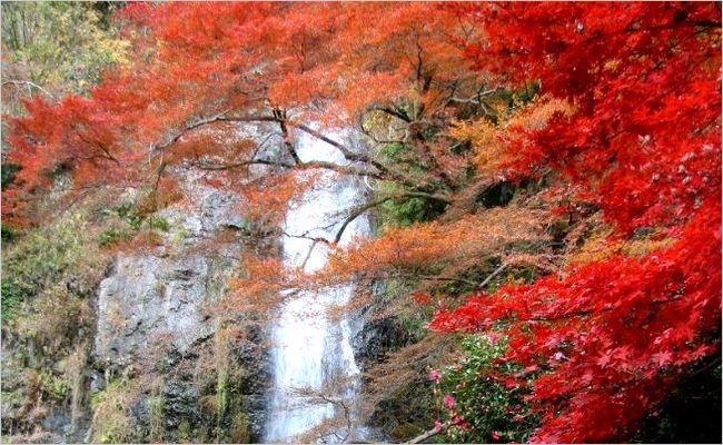 大阪_紅葉_箕面の滝