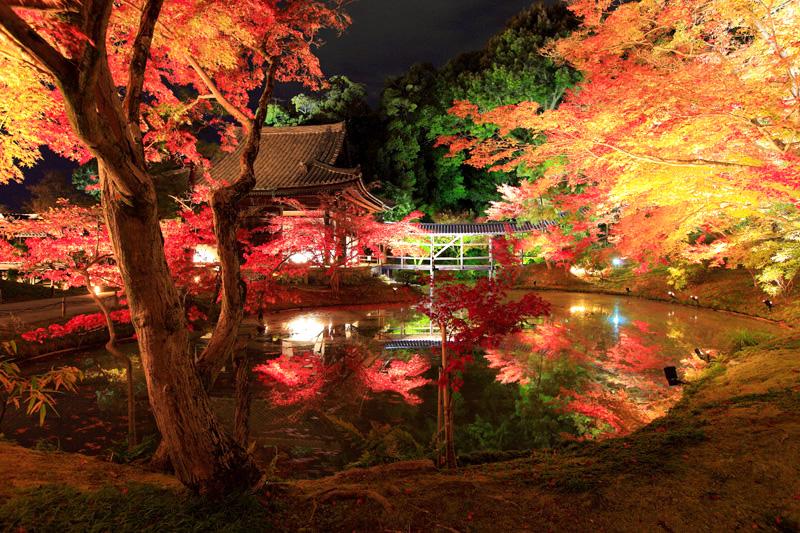 京都_ライトアップ_2015_高台寺