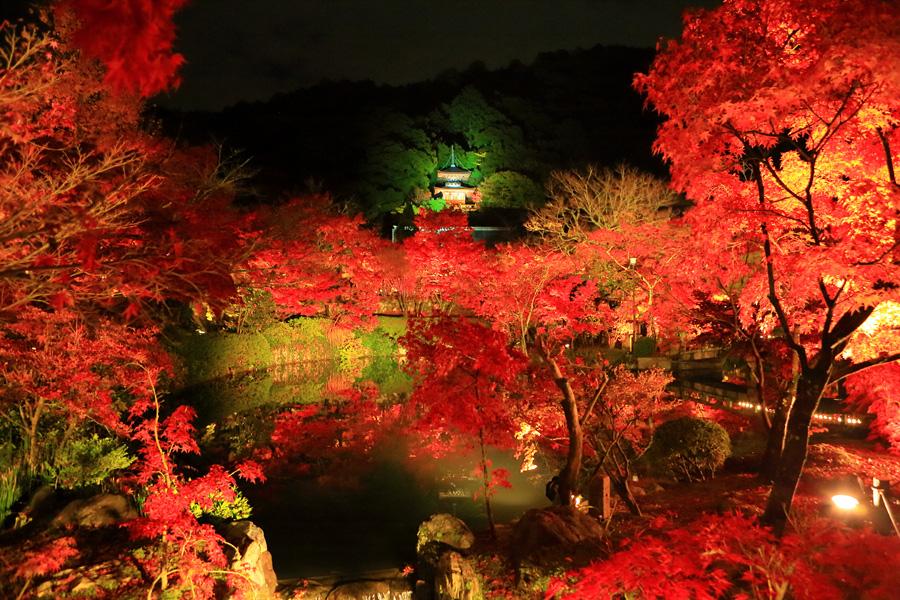 京都_ライトアップ_2015_永観堂