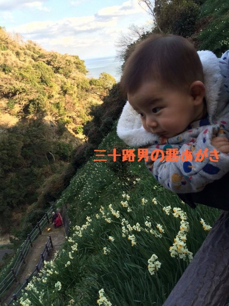灘黒岩水仙郷_開花状況_園内3
