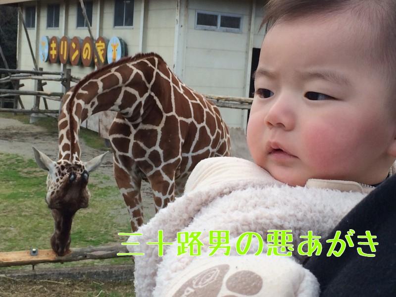 みさき公園_キリン