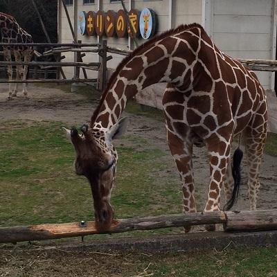 みさき公園の動物園と遊園地/赤ちゃん・子供が主役のおでかけ場所