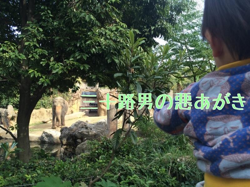 天王寺動物園_ゾウ