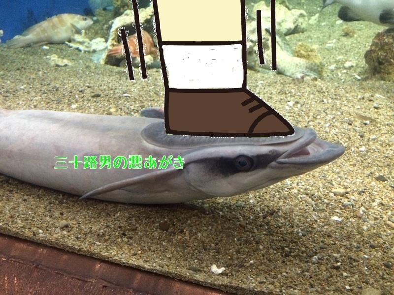 コバンザメの頭に靴底