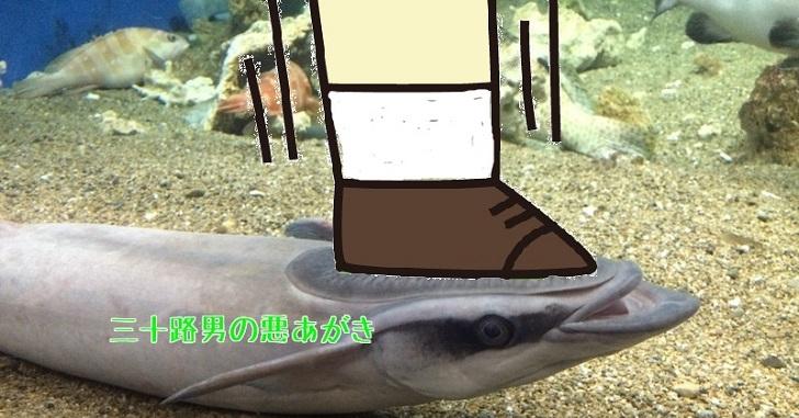 コバンザメは壁やガラスにもくっつく。更に1匹でいる姿は…
