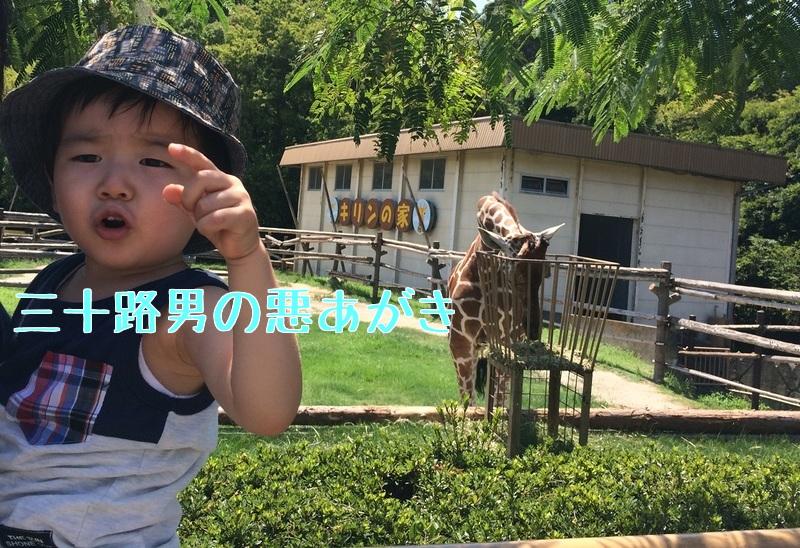 みさき公園_キリンと息子